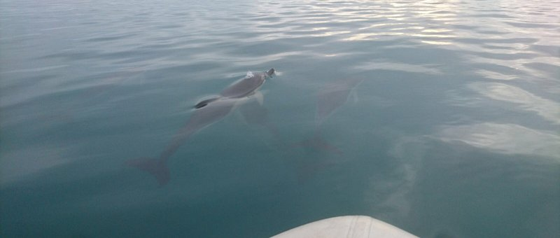 We had some visitors to the bay, Dolphins!